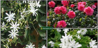flower-plants