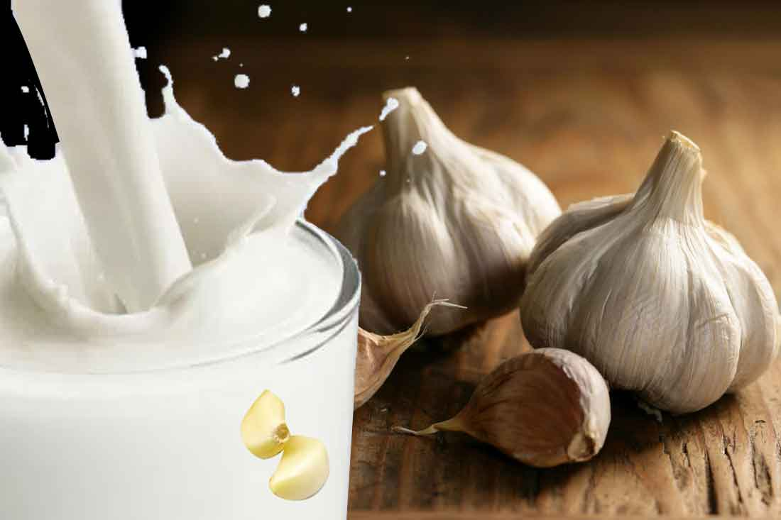 garlic-milk