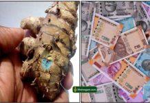karu-manjal-cash