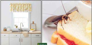 kitchen-cockroach