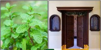 mint-puthina-vasal
