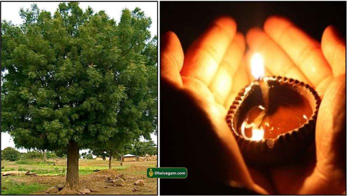 neem-tree-vilakku