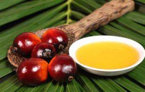 palm-oil1-images