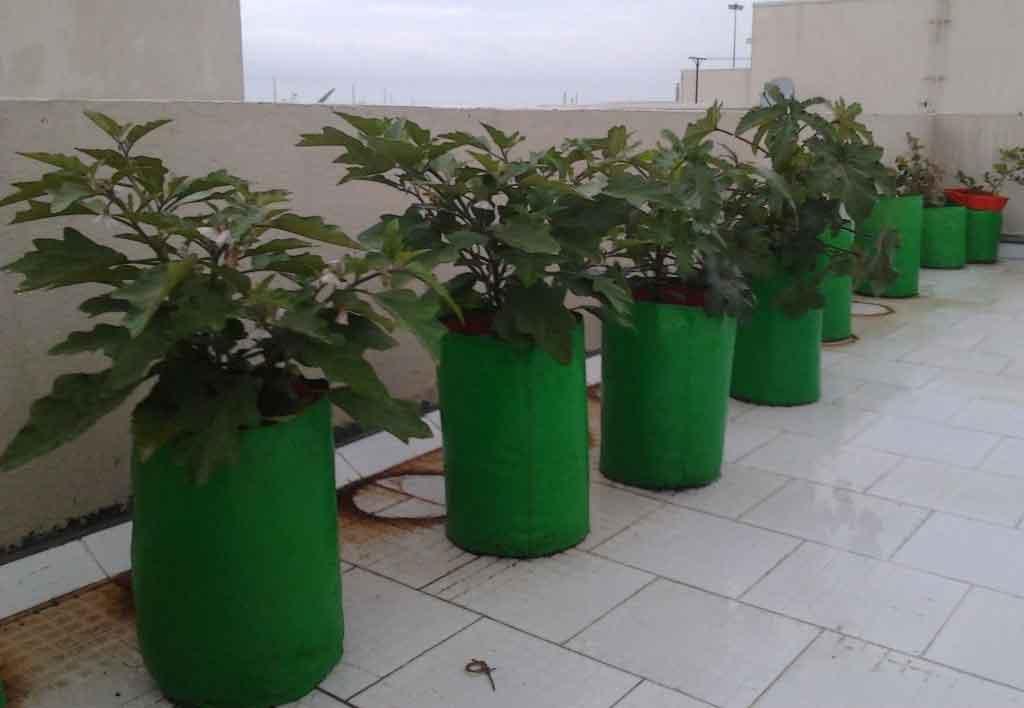 plant-grow-bag