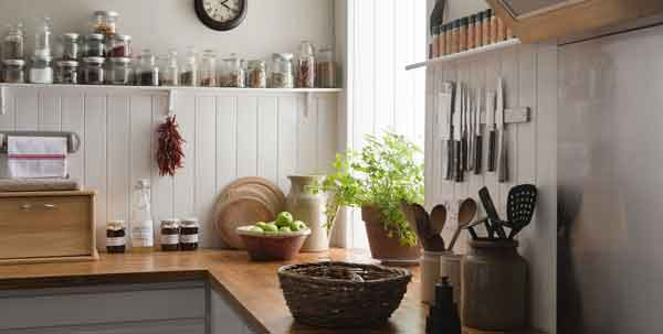 plant-in-kitchen