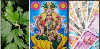 sembaruthi-leaf-lakshmi-cash