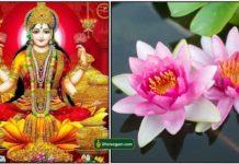 lakshmi-lotus