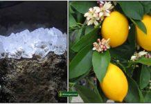 padikaram-lemon