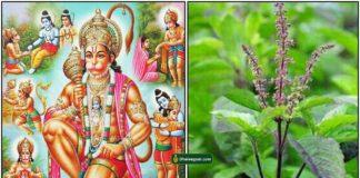 hanuman-thulasi