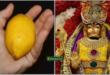 lemon-murugan