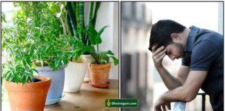 plant-sad-men