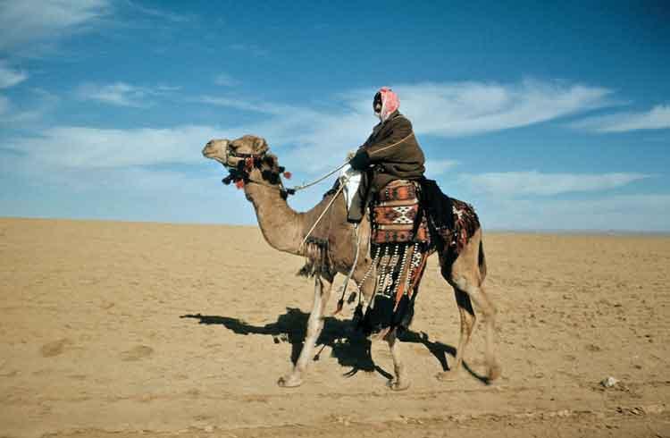 camel-ottagam