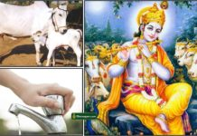 cow-krishna-water