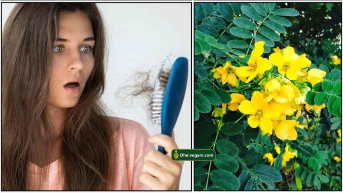hair-fall-aavaram-poo