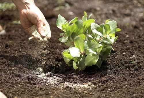 plant-uram