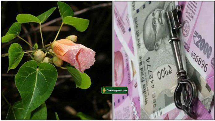 poovarasan-leaf-cash