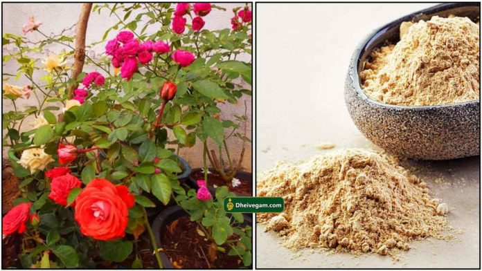rose-plant-fish-fertilizer