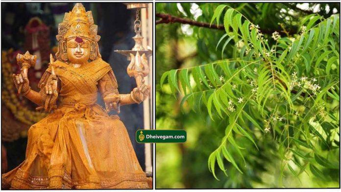 amman-neem-tree