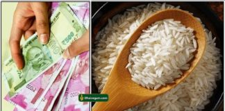 cash-rice