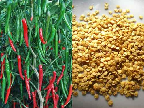 chilli-seeds
