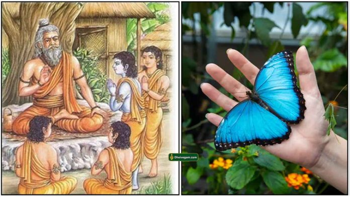 guru-shishya-butterfly