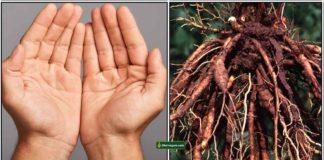 hand-root