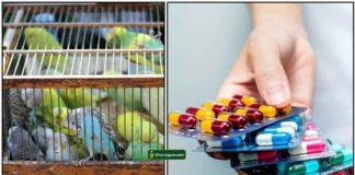 birds-medicine