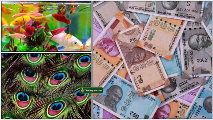 fish-peacock-cash