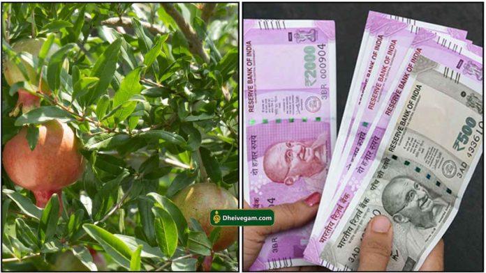 madhulai-cash