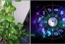 money-plant-astro