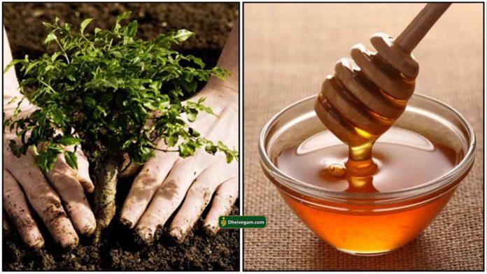 plant-honey