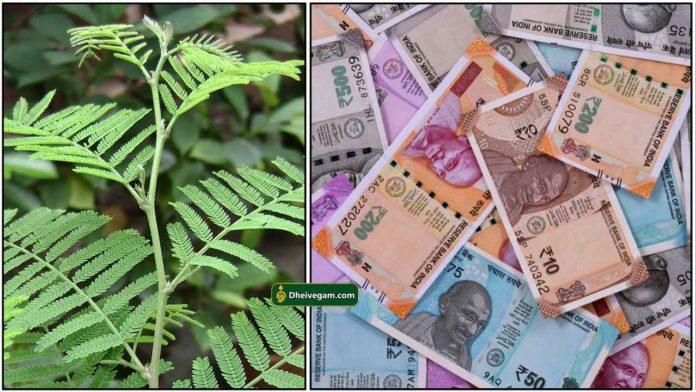 vanni-cash