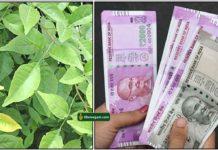 vilva-leaf-cash
