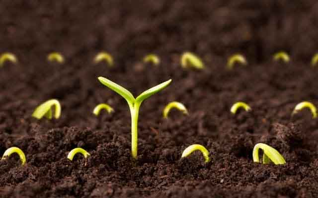 seeds-plant