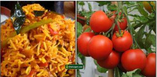 thakkali-satham-tomato