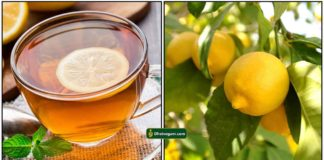 lemon-tea3