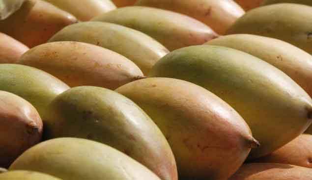 mango-mangaai