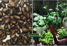 water-melon-seeds-plants